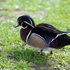 Marwell Zoo 12-05-12  208