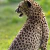 Marwell Zoo 12-05-12  203