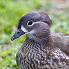 Marwell Zoo 12-05-12  211