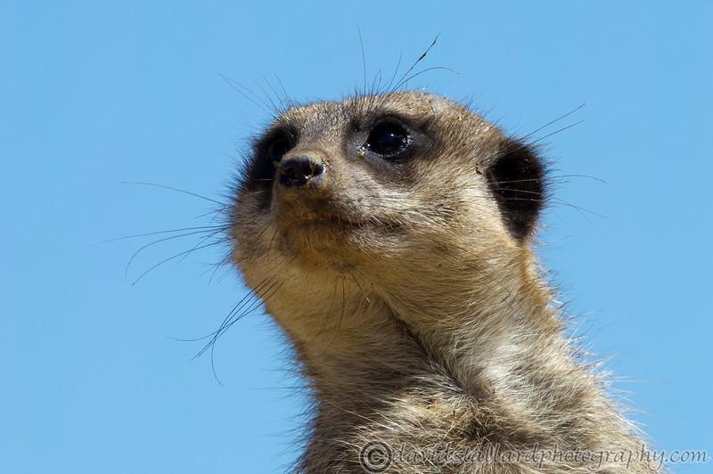 IMAGE: http://www.davidstallardphotography.com/Animals/Zoos/Marwell-Zoo-12-05-12/i-nx4KdJZ/0/L/Marwell-Zoo-12-05-12-013-L.jpg