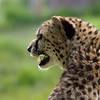 Marwell Zoo 12-05-12  204