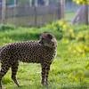 Marwell Zoo 12-05-12  205