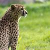 Marwell Zoo 12-05-12  202