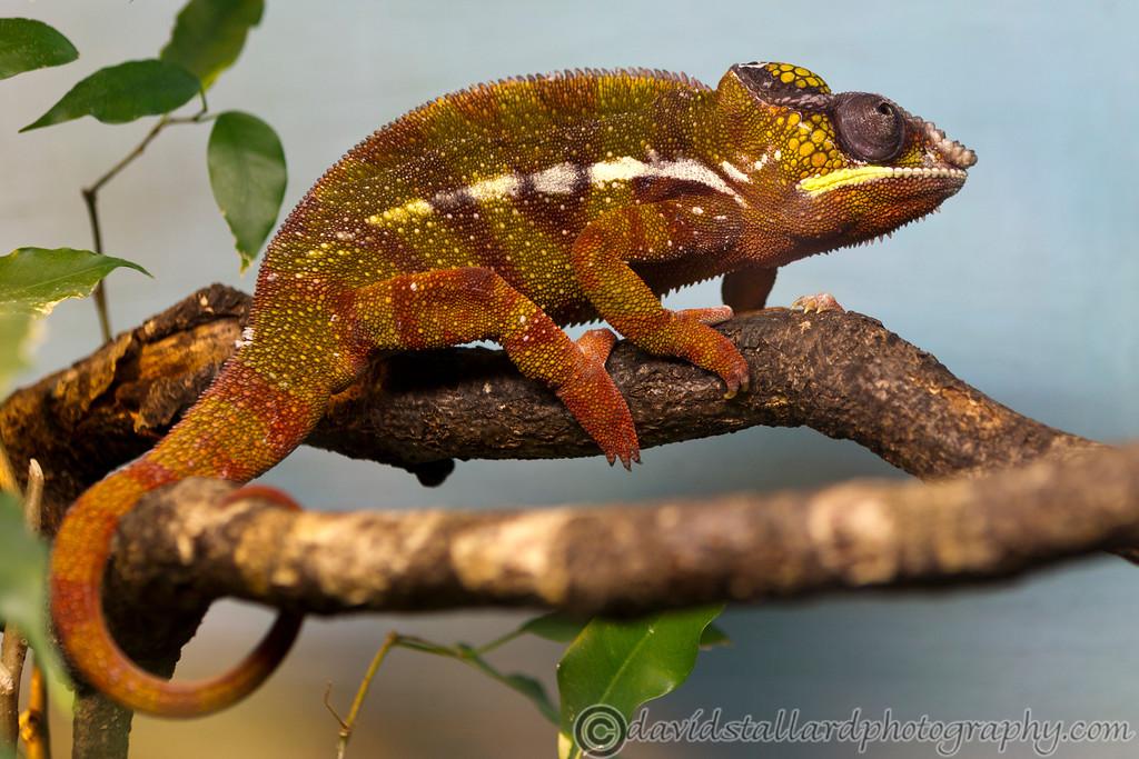 IMAGE: http://www.davidstallardphotography.com/Animals/Zoos/Marwell-Zoo-20-04-13/i-TBrrcMp/0/XL/Marwell%20Zoo%2020-04-13%20%20100-XL.jpg
