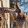Marwell Zoo 20-04-13  019