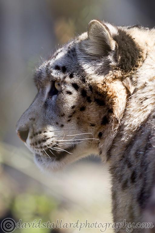 IMAGE: http://www.davidstallardphotography.com/Animals/Zoos/Marwell-Zoo-20-04-13/i-mZQrm65/0/XL/Marwell%20Zoo%2020-04-13%20%20139-XL.jpg