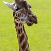 Marwell Zoo 22-09-14  005