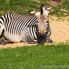 Marwell Zoo 22-09-14  010