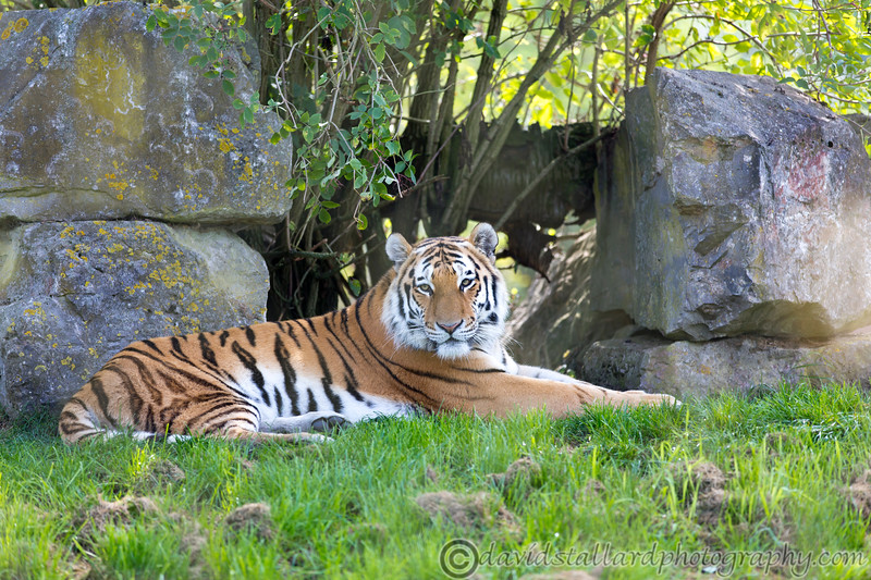 Marwell Zoo 22-09-14  015