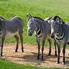 Marwell Zoo 22-09-14  018