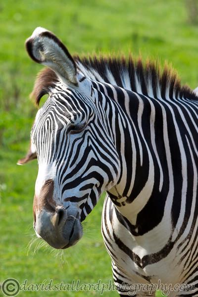 Marwell Zoo 22-09-14  019