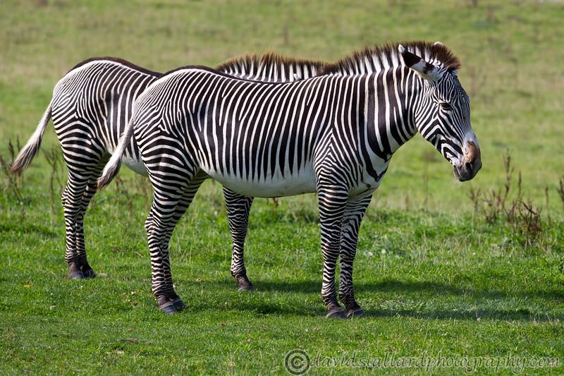 Marwell Zoo 22-09-14  020