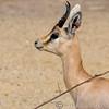 Marwell Zoo 22-09-14  012