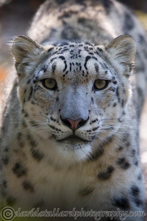 IMAGE: http://www.davidstallardphotography.com/Animals/Zoos/Marwell-Zoo-Collection/Marwell-Zoo-22-09-14/i-WbFN5xw/0/XL/Marwell%20Zoo%2022-09-14%20%20104-XL.jpg
