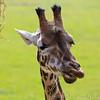 Marwell Zoo 22-09-14  004