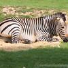 Marwell Zoo 22-09-14  009