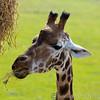 Marwell Zoo 22-09-14  002