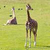 Marwell Zoo 22-09-14  006