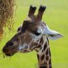 Marwell Zoo 22-09-14  003