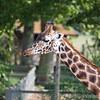 Marwell Zoo 22-09-14  007