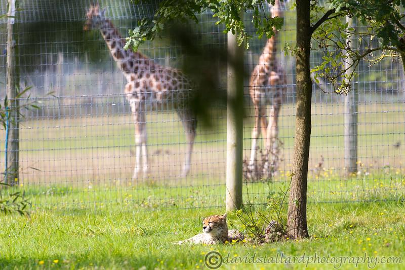 Marwell Zoo 22-09-14  001