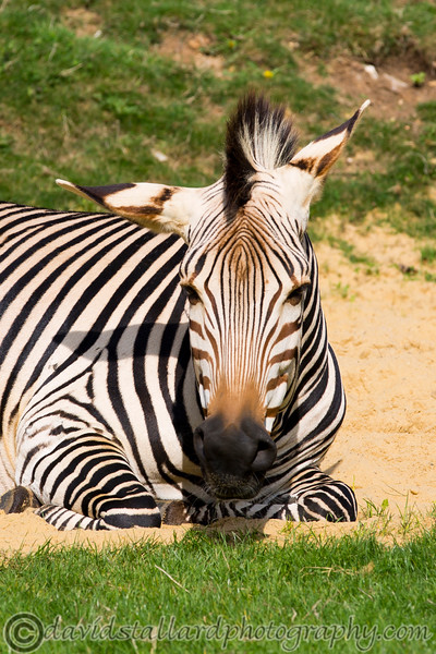 Marwell Zoo 22-09-14  011