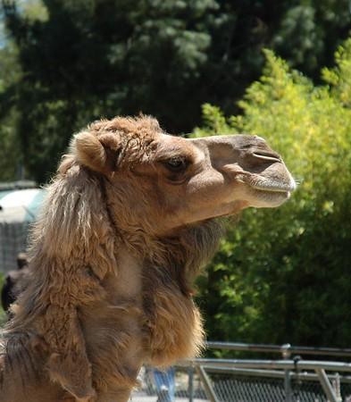 Oakland Zoo, 2005-06-05