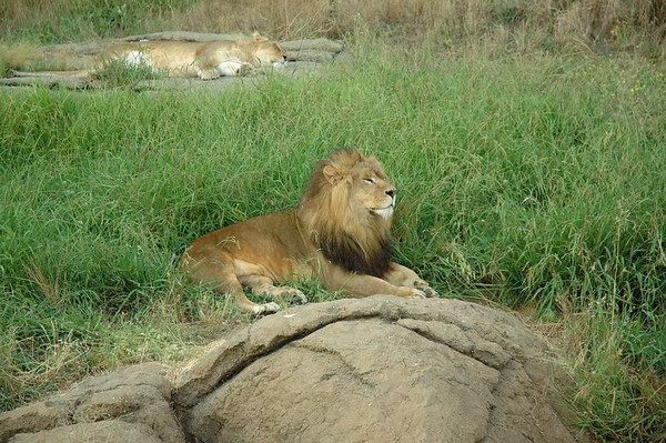Oakland Zoo, 2006-07-27