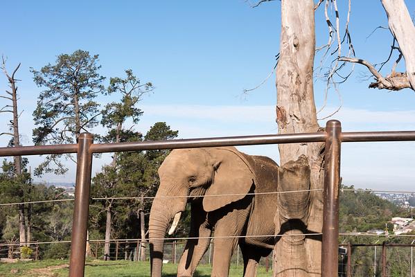 Oakland Zoo, 2015-03-14