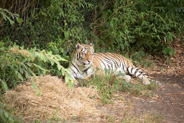 Oakland Zoo, 2015-07-12