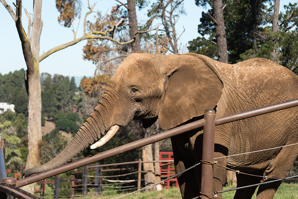 Oakland Zoo, 2016-04-16