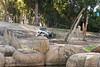 Feeding elephants at the Oakland Zoo on Saturday, April 16, 2016