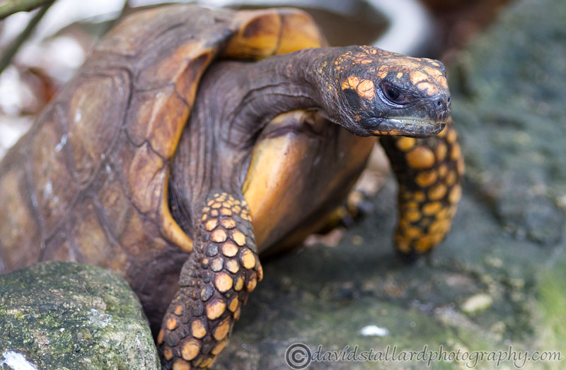 Paignton Zoo 26-03-12  004