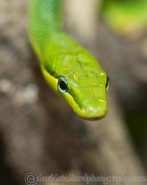 Paignton Zoo 26-03-12  008