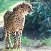 Paradise Wildlife Park 28-09-13  0014