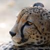 Paradise Wildlife Park 28-09-13  0008