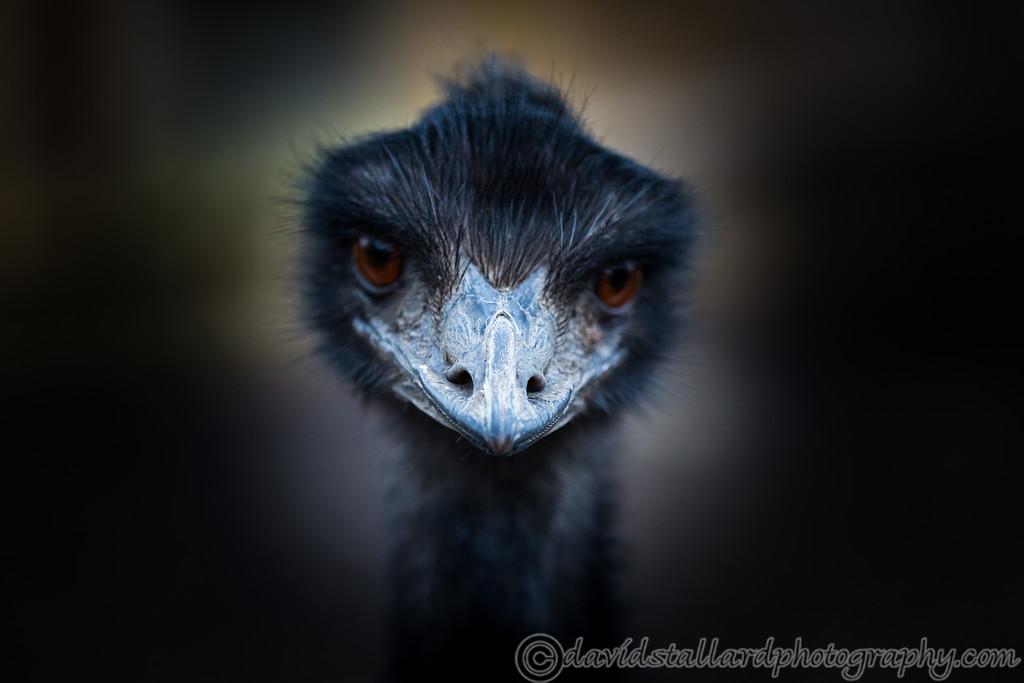 IMAGE: https://photos.smugmug.com/Animals/Zoos/Paradise-Wildlife-Park-28-09/i-HPnmzqM/0/a755b0d3/XL/Paradise%20Wildlife%20Park%2027-01-18%20%200043-XL.jpg