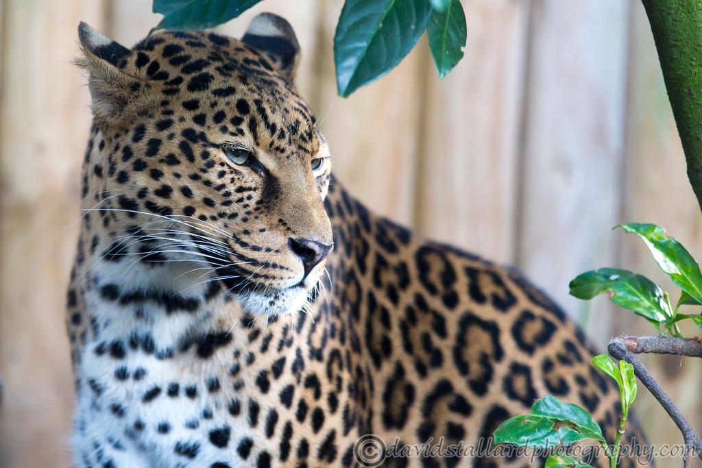 IMAGE: http://www.davidstallardphotography.com/Animals/Zoos/Paradise-Wildlife-Park-28-09/i-LDhjQN5/0/XL/Paradise%20Wildlife%20Park%2028-09-13%20%200029-XL.jpg
