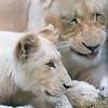 Paradise Wildlife Park 28-09-13  0002