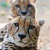 Paradise Wildlife Park 28-09-13  0006