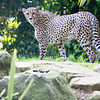 Paradise Wildlife Park 28-09-13  0016