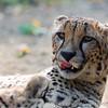 Paradise Wildlife Park 28-09-13  0004