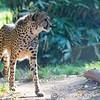 Paradise Wildlife Park 28-09-13  0015
