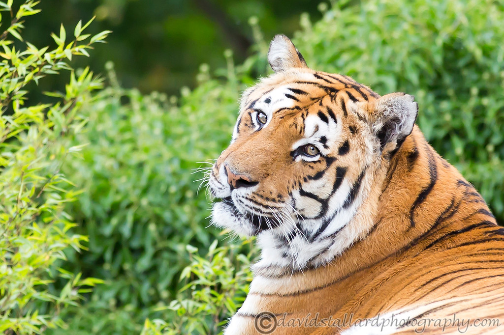 IMAGE: http://www.davidstallardphotography.com/Animals/Zoos/Paradise-Wildlife-Park-28-09/i-nczMSP9/0/XL/Paradise%20Wildlife%20Park%2028-09-13%20%200189-XL.jpg