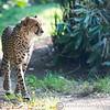 Paradise Wildlife Park 28-09-13  0013