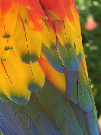 Parrot Jungle Island, Florida