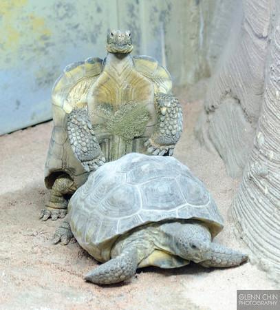 20130628_Philadelphia Zoo_432-Edit