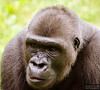 20130628_Philadelphia Zoo_131