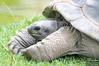 20130628_Philadelphia Zoo_442