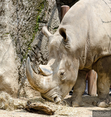 20130628_Philadelphia Zoo_515